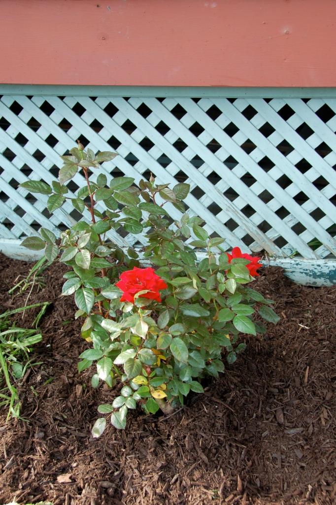 Garden for Blog27